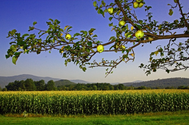 plymouth-apples-and-corn